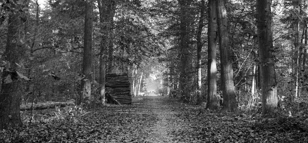zwart-wit bomen bos paddenstoel  mooieplaatjes